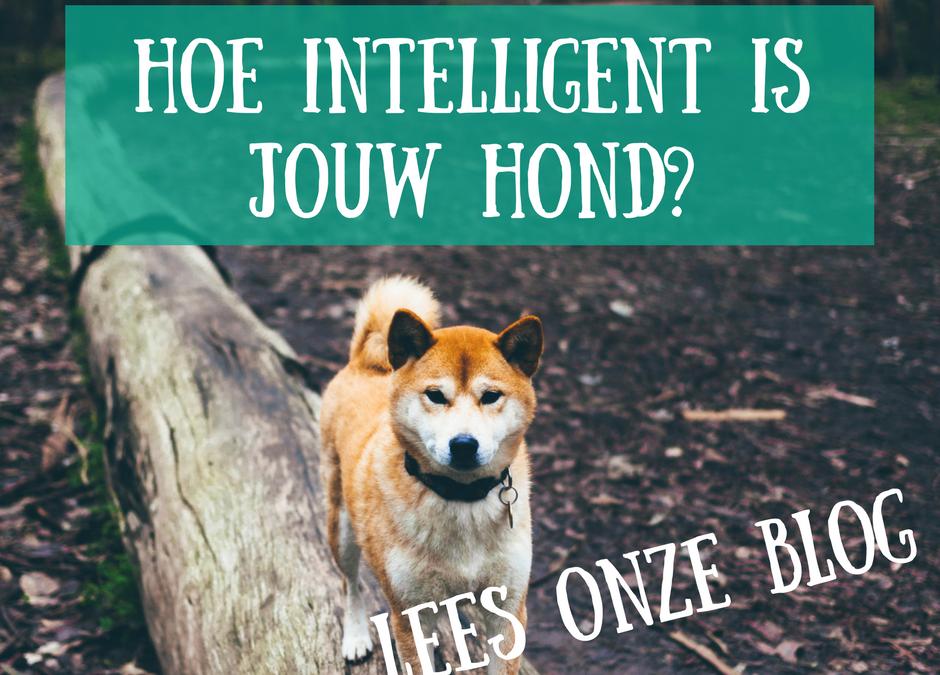 Wat zijn de intelligentste hondenrassen?